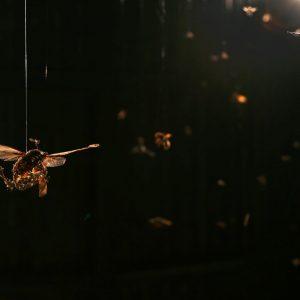 Tessa Farmer: The Horde (Detail), 2013. Insekten, Spinnen, Eidechse, Seepferdchen, Mäuse- und Rattenknochen, Stachelschweinstacheln, Igelstacheln, Seeigelstacheln, Pflanzenwurzeln, Leim, Leuchtmittel